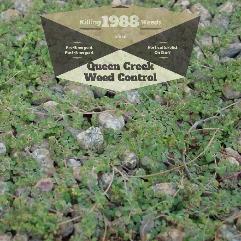 Queen creek az weed control green keeper for Landscaping rock queen creek az