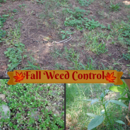 Fall Weed Control