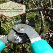 Pruning and Planting for the 2015 Growing Season