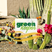 Winter Weed Prevention in your Desert Landscape