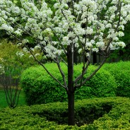 Shrub and Tree Fertilization
