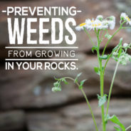 How to Prevent Winter Weeds in Your Rocks